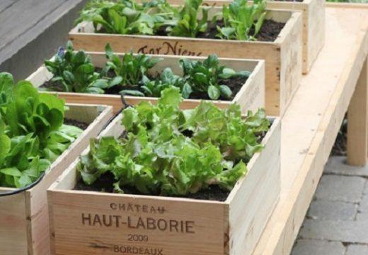 Идеи за градинарство на тесни балкони
