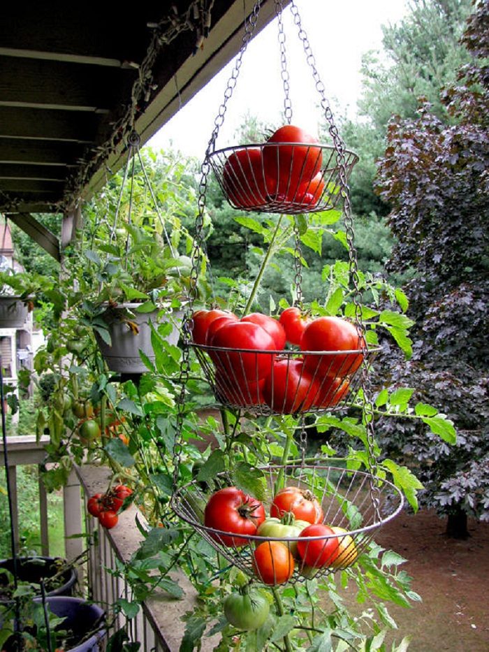 Balcony-vegetable-garden-photo