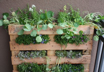 Pallet-garden-by-Fern-at-Life-on-the-Balcony