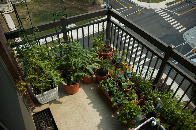 fertilizer-balcony-herb-garden-ideas