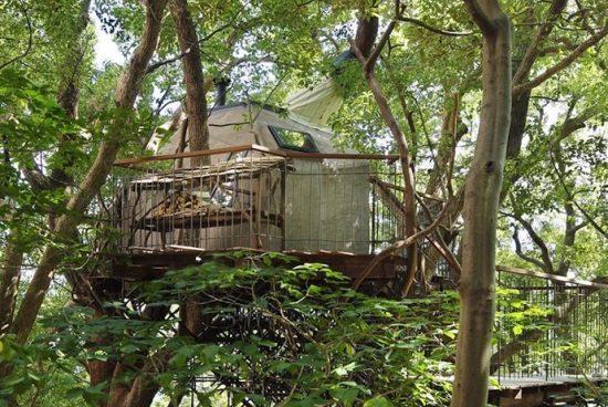 Най-голямата къщичка на дърво в Япония