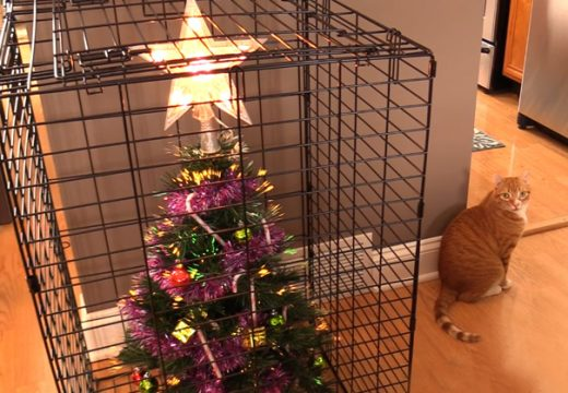 50 начина да опазиш елхата от непослушни котки и кучета