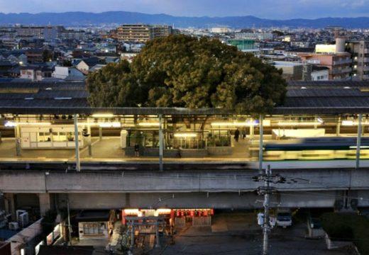 Построиха гара около 700-годишно дърво