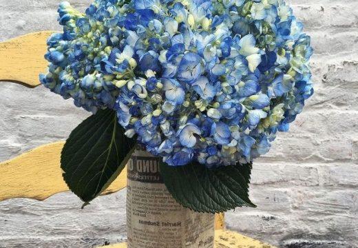 """""""Направи си сам"""" красива циментова ваза"""