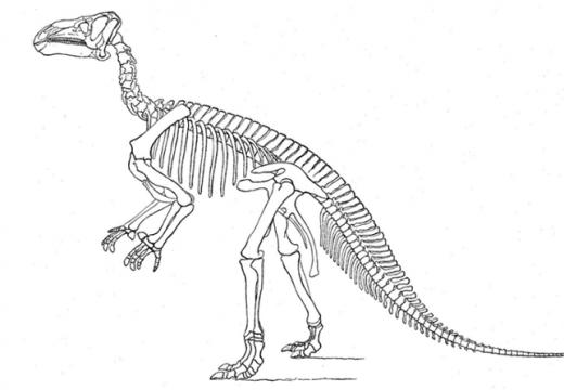Откриха останки от динозаври в завод на Винербергер