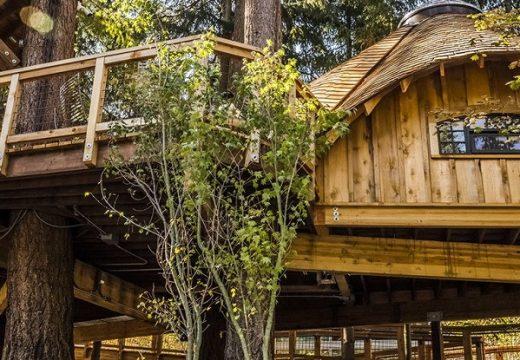 Microsoft местят офиса си в дървени къщички в гората