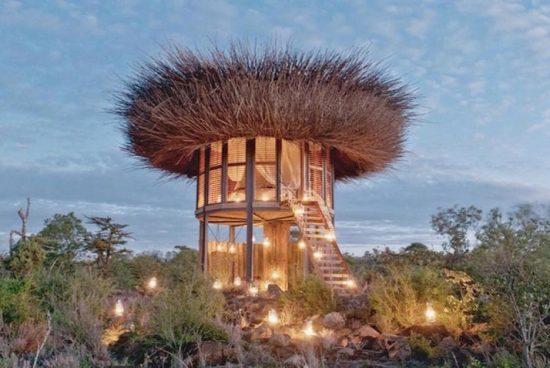 Апартамент-гнездо в африканската савана