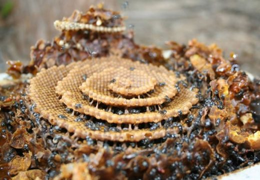 Невероятната архитектура на пчелите