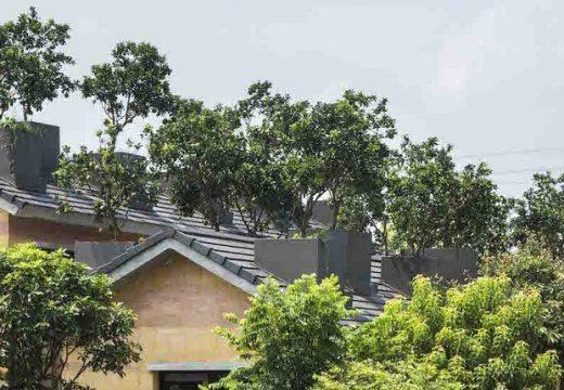 Портокалови дървета растат по покривите на къщи