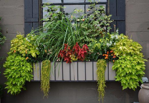 10 интересни растения за сандъче на прозореца