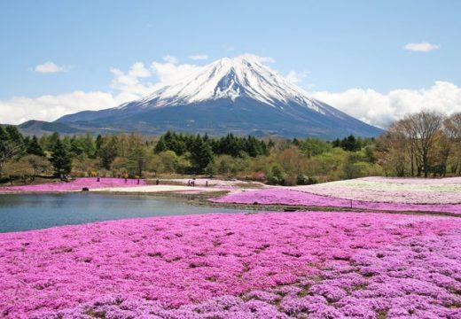 10 невероятни полета с цветя, които да посетите