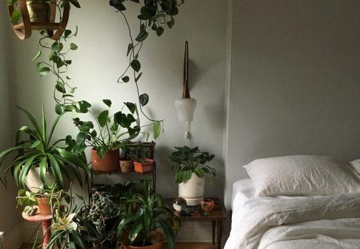 5 растения, които виреят на мрачно