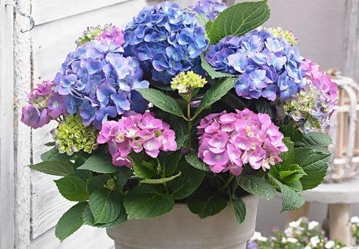 Кои са най-подходящите цветя за хора с алергии?
