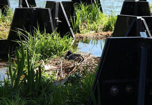 Плаващ парк в Ротердам е направен от рециклирана пластмаса