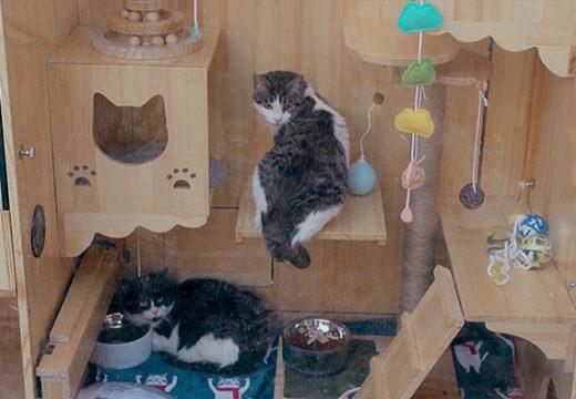 Инженер направи заслон за котки с изкуствен интелект (видео)