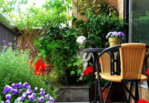 6 съвета за растения в саксии и сандъчета