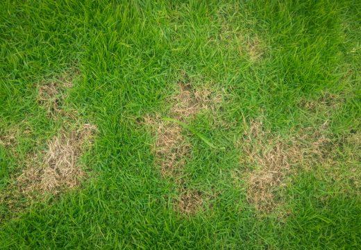 Как бързо и лесно да закърпим тревата на петна