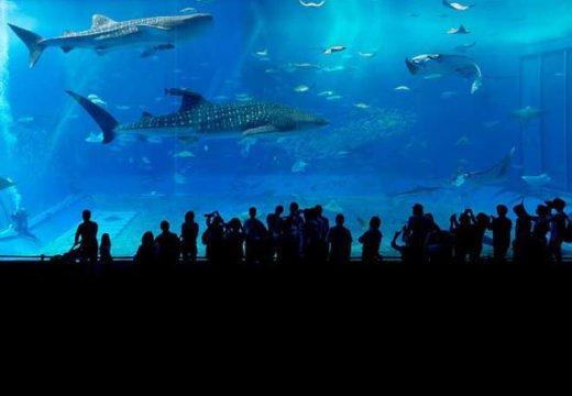 Откриха огромен аквариум на над 2200 м надморска височина