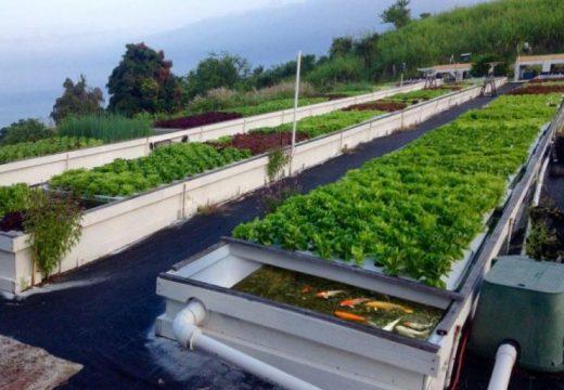 Зеленчуци на покрива в университета в Стара Загора