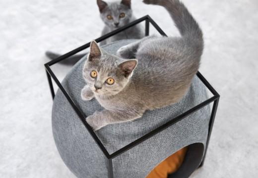 Модна линия легла за котки