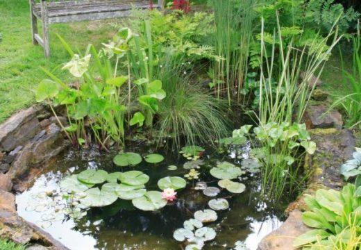 Как да си направим езерце в двора или на балкона