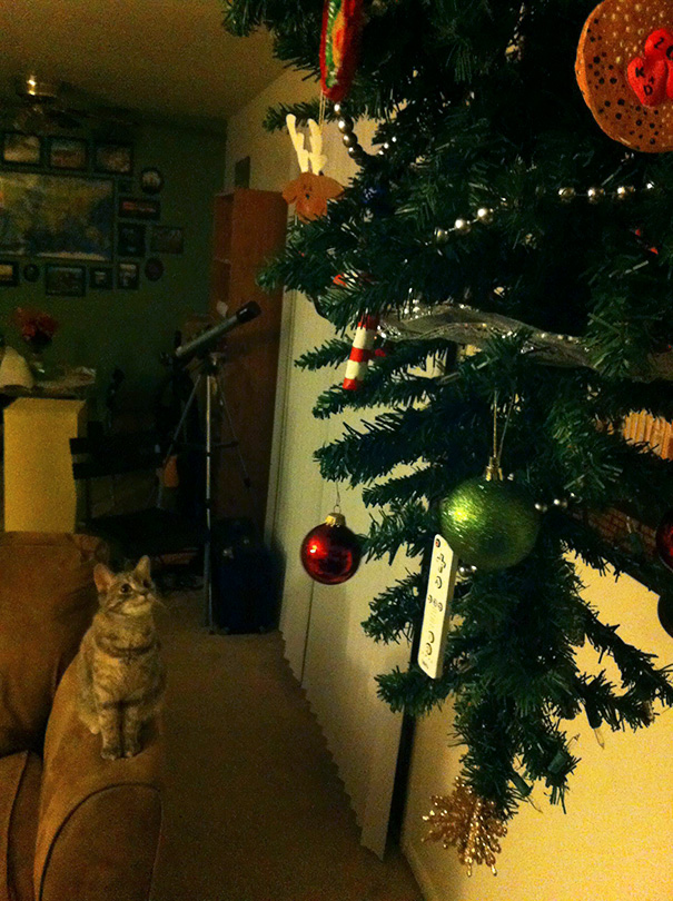 protecting-christmas-tree-from-dogs-cats-pets-7-585a67a8843d3__605