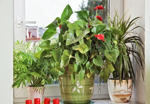 8 начина как да предпазим цветята си