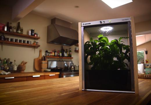Отглеждайте градински растения в апартамента