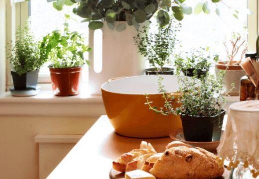 7 билки, които може да гледаме в апартамента