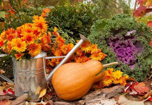 6 растения, които виреят на открито през есента