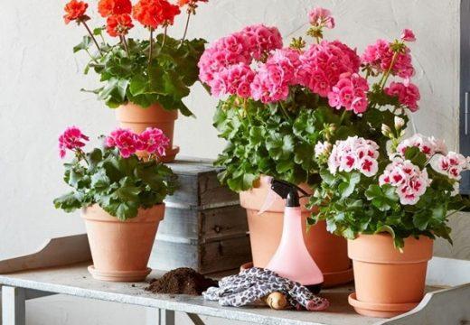 Полезните и вредни растения в дома
