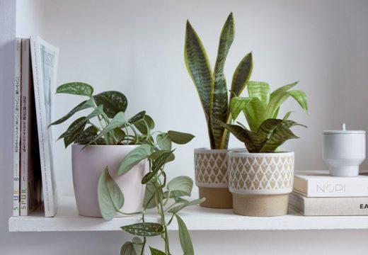 Зимни грижи за стайните растения