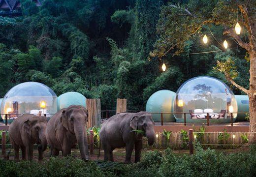 Вече може да спите в прозрачен балон в джунглата