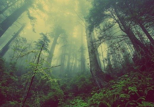 3 милиарда дървета ще бъдат засадени в ЕС до 2030 г. като част от план за възстановяване на природата