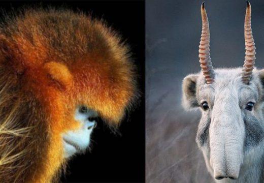 Фотограф прекарва две години в заснемане на животни, застрашени от изчезване