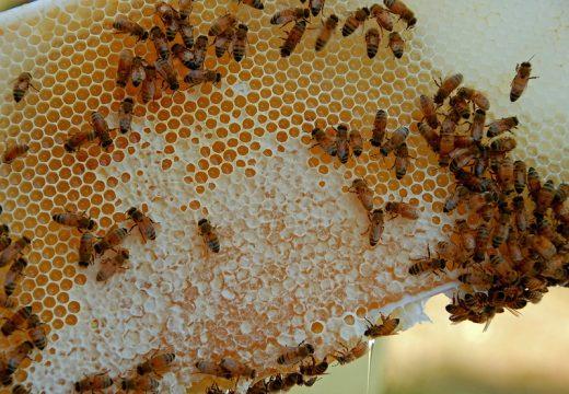Между 40 и 60% спад на медопроизводството за 2020 г.