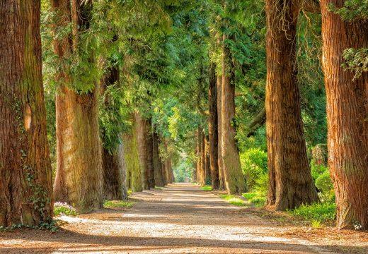 2500 дървета ще бъдат засадени в София през октомври