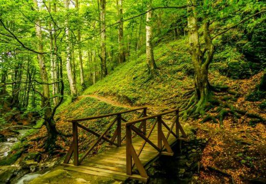 """Български проект е отличен с европейска награда """"Натура 2000"""" за 2020 г."""