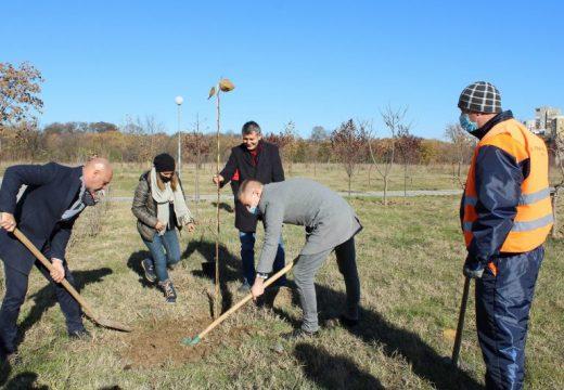 Близо 2000 нови дървета в Пловдив по желание на граждани
